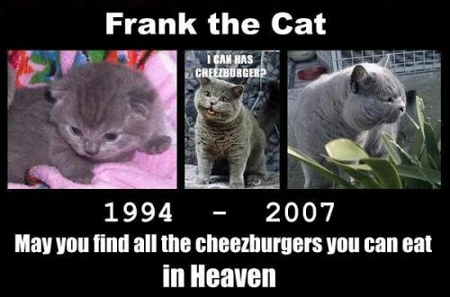 frankrip3.thumbnail Famous LOLCat Dies Sad :( lolcats Cute As Hell Animals