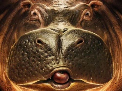hippo.jpg (81 KB)