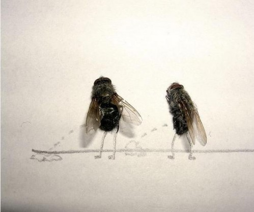 Flies1 499x415 Dead Flies wtf Cute As Hell Animals Art