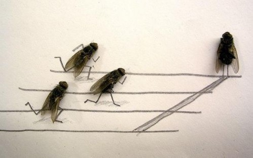 Flies2 499x312 Dead Flies wtf Cute As Hell Animals Art