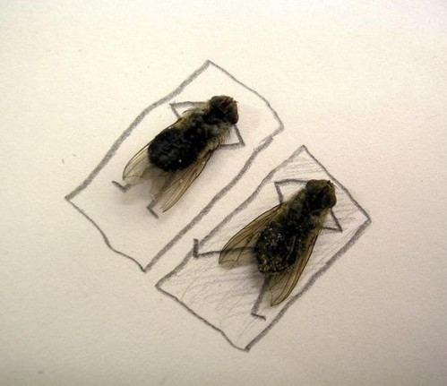 Flies3 499x431 Dead Flies wtf Cute As Hell Animals Art
