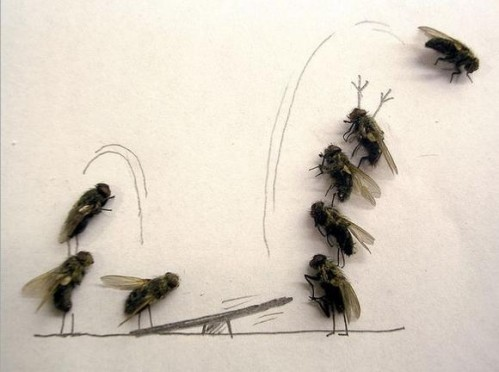 Flies5 499x372 Dead Flies wtf Cute As Hell Animals Art