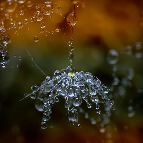 Water5 500x499 Water Droplets Wallpaper Visual Tricks Nature Awesome Things