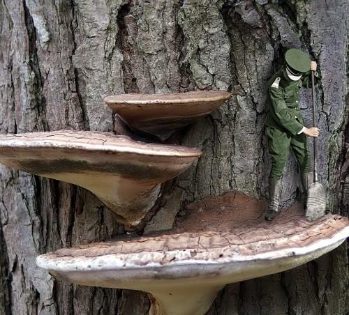 mushroom.jpg (560 KB)