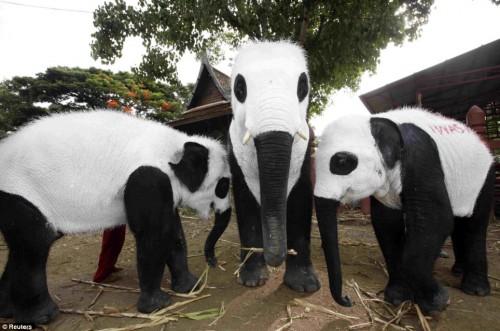 pandaphants.jpg (173 KB)