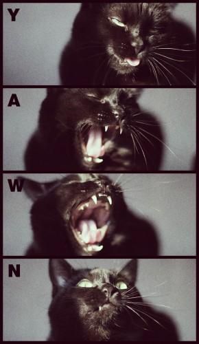 Yawn.jpg (289 KB)