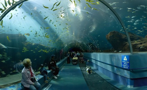 Ride Through Aquarium