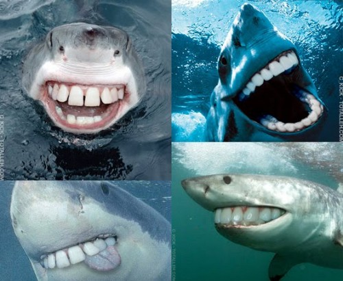 smilesharks 500x411 Happy Sharks Cute As Hell Animals