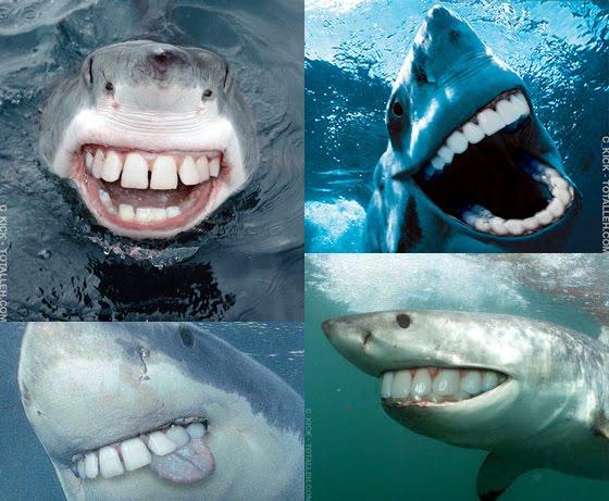 smilesharks.jpg