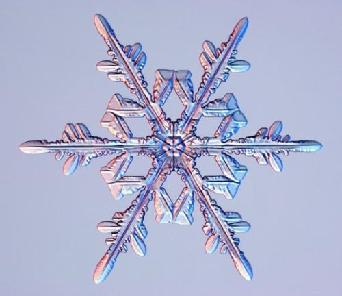snowflake10.jpg (66 KB)