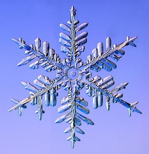 snowflake7.jpg (73 KB)