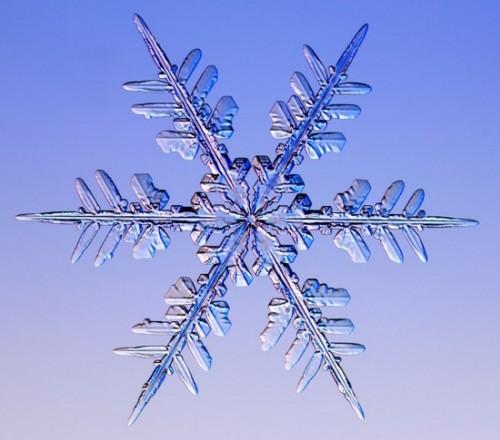 snowflake8.jpg (60 KB)