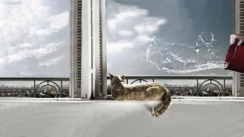 kitty.jpg (1 MB)