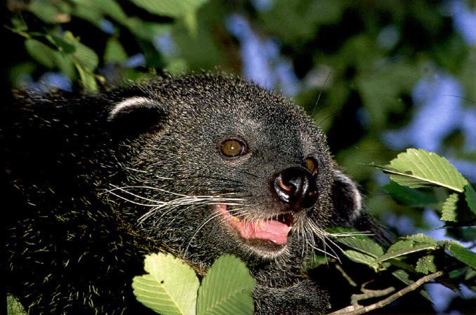 bint Its a bear! Its a cat! Its a bearcat! wtf Cute As Hell Animals