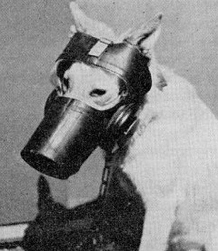 dog gas masks 15 Doggy Gas Masks wtf Military Gas Masks