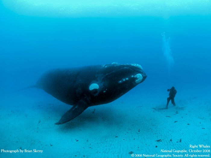 whale.jpg (181 KB)