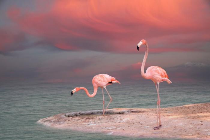 flamingo.jpg (107 KB)