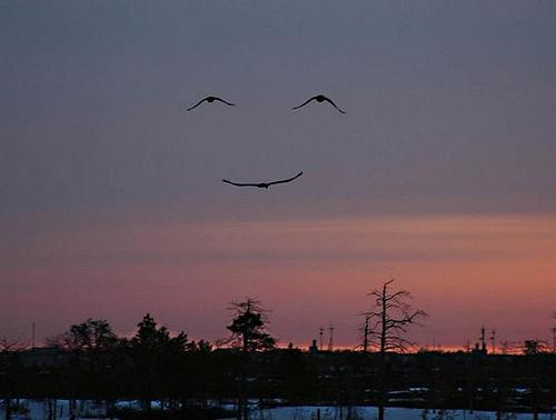 Smile.jpg (12 KB)