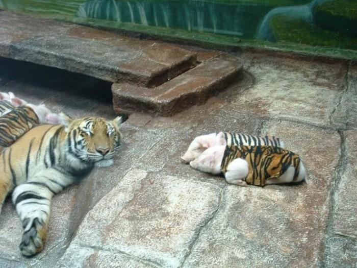 tiger_mom_1.jpg (77 KB)