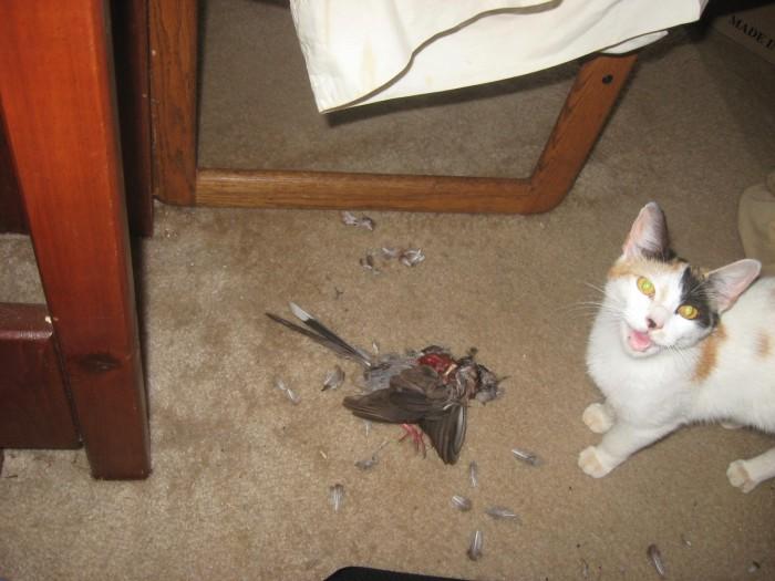 murder-cat.jpg (229 KB)