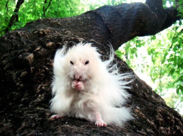 ninja-hamster.jpg (970 KB)