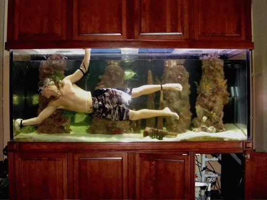 tank How to clean your aquarium Awesome Things aquariums