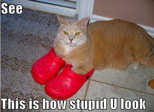 stupid_ass_crocs.jpg (47 KB)