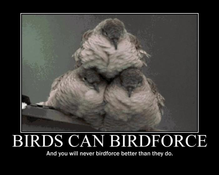 1264989091202 700x560 Birdforce Nature Humor