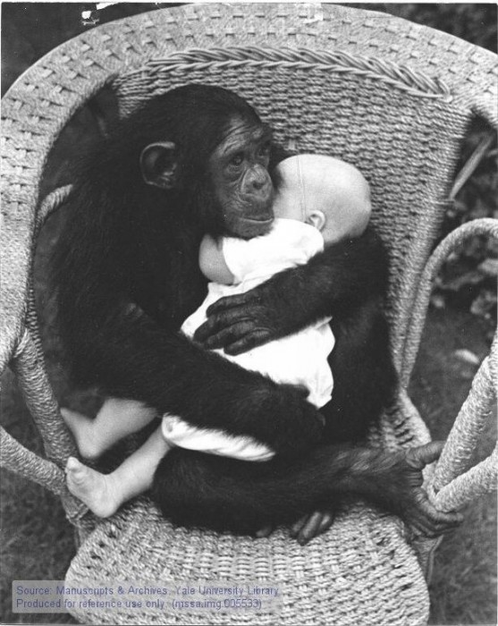 monkeyandbaby.jpg (98 KB)