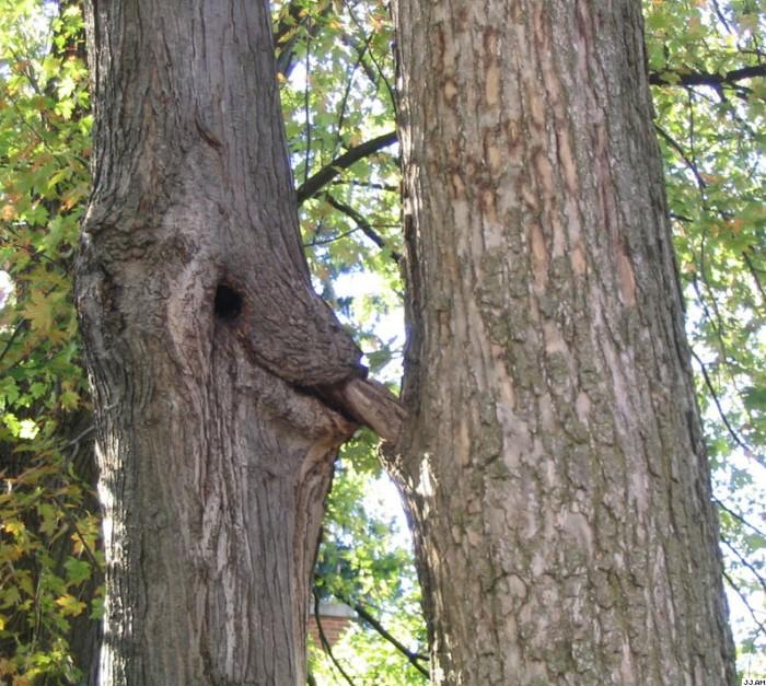 tree.jpg (192 KB)