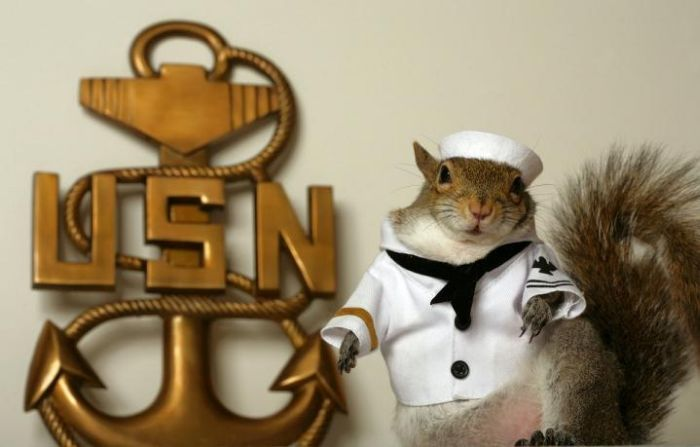 Navy squirrel.jpg (37 KB)