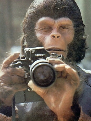 ape photographer.jpg (117 KB)