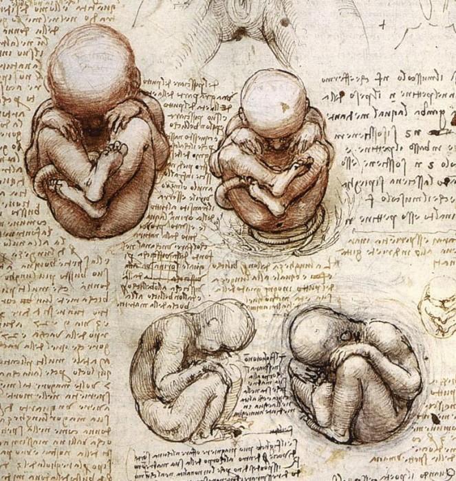 fetus.jpg (181 KB)