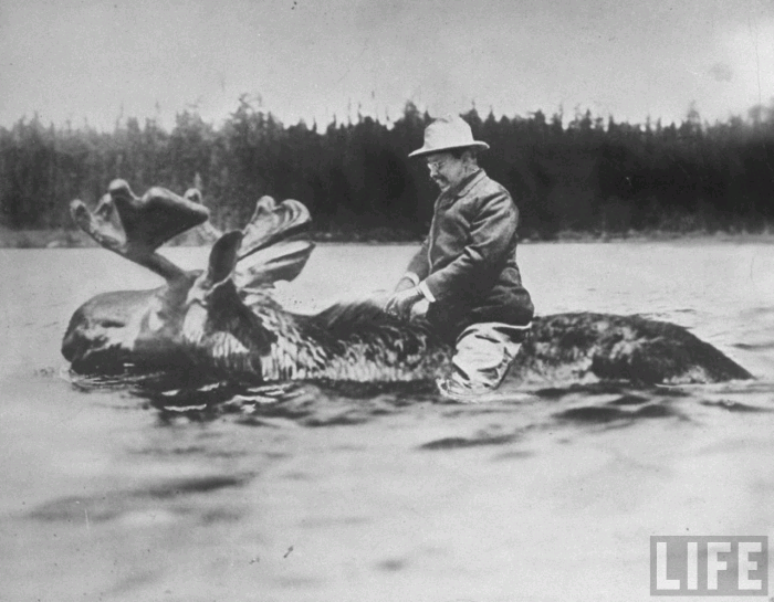 Roosevelt Drowns a Moose