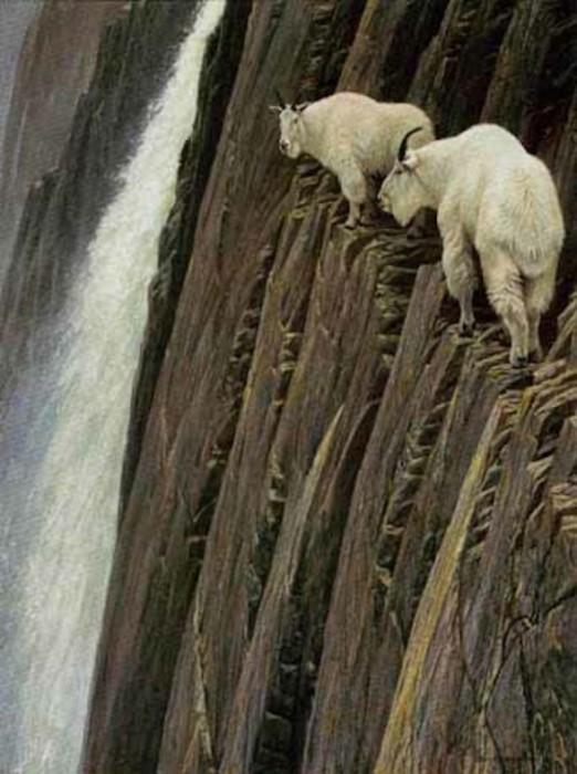 crazy_goats_01.jpg (105 KB)