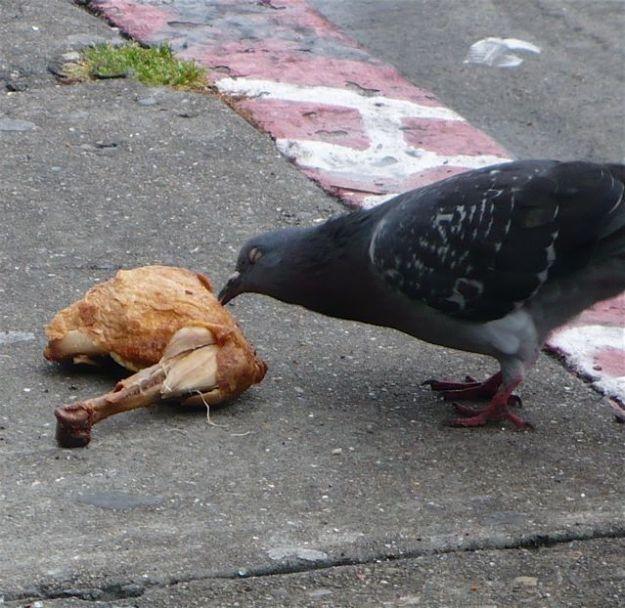cannibalbird.jpg (82 KB)