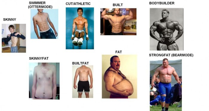 m 700x371 Different types of male bodies Humor