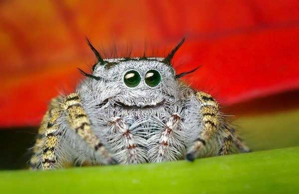 happy-spider.jpg (25 KB)
