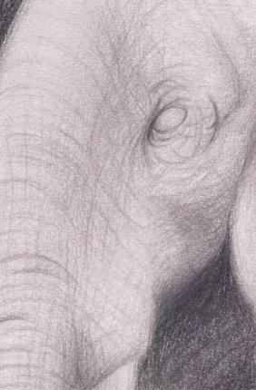 elephant Drawings by Draik MCS Art