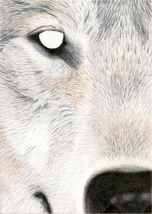wolf.jpg (124 KB)