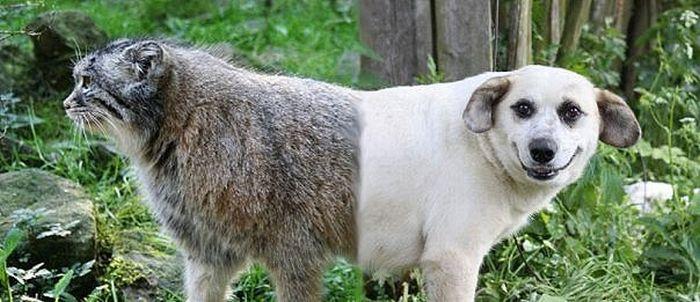 CatDog.jpg (56 KB)