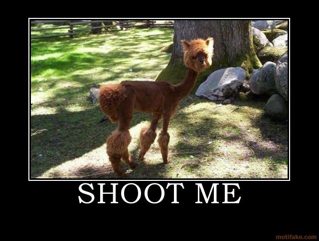 shoot-me-alpaca.jpg (79 KB)