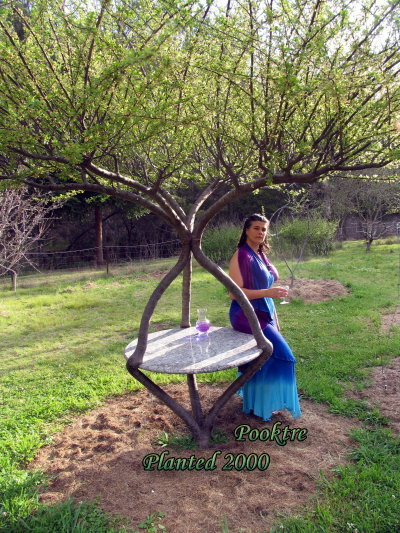 becky living garden table Growing trees wtf Nature Art