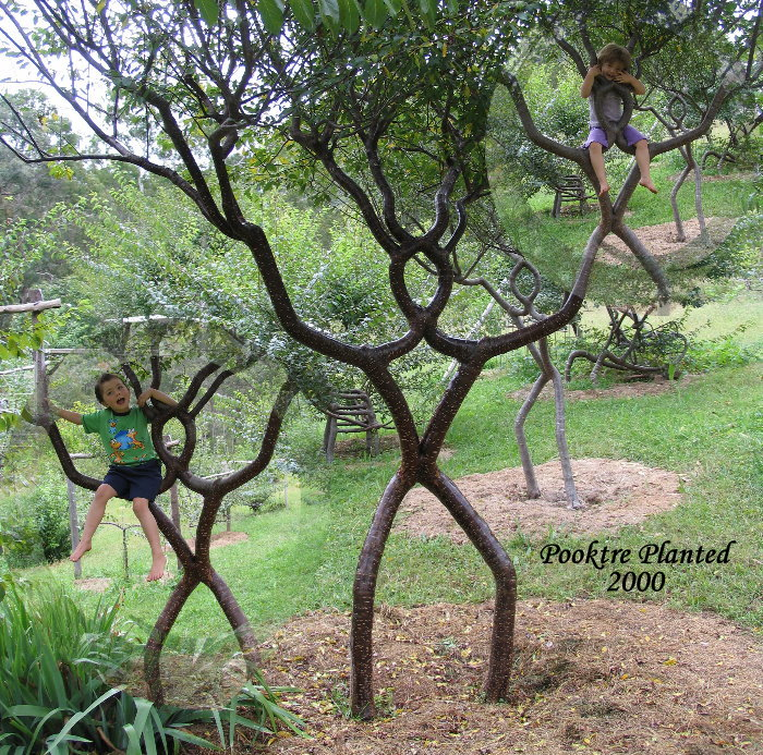 person tree Growing trees wtf Nature Art
