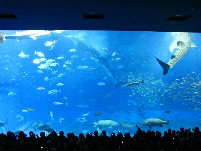 Okinawa Churaumi Aquarium HiRes Wall