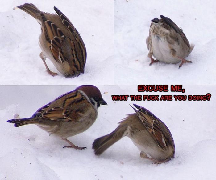 birds.jpg (222 KB)