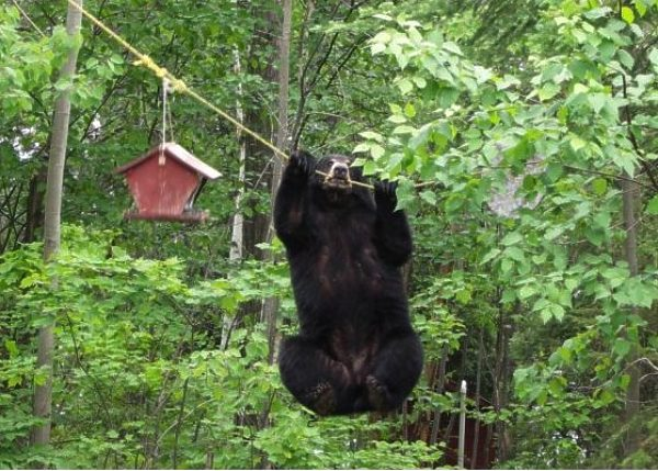 bear2 I have my bird feeder wtf