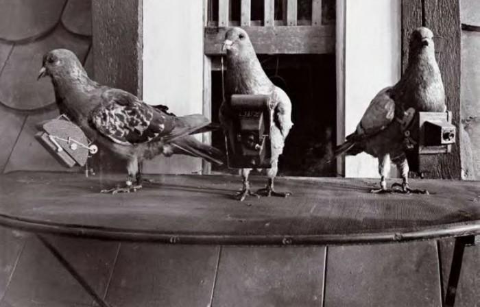 Pigeoncameras.jpg (67 KB)