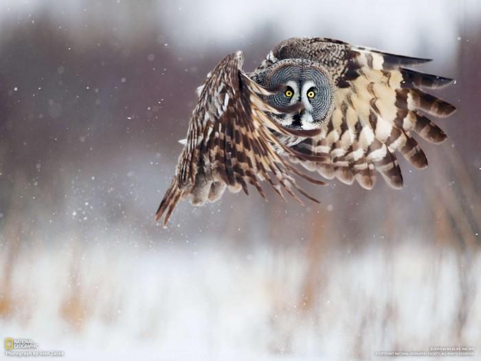 owl.jpg (122 KB)