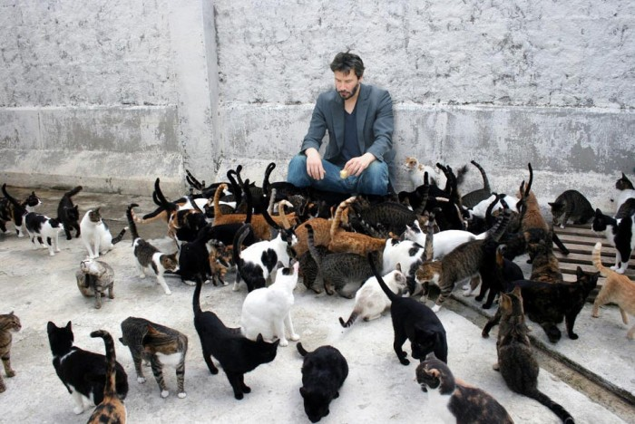 Keanu Cats.jpg (141 KB)